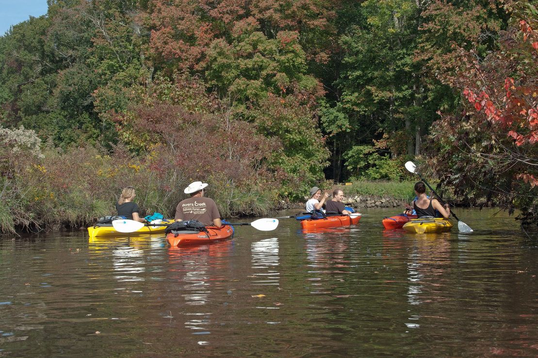 salt marsh kayak eco tour
